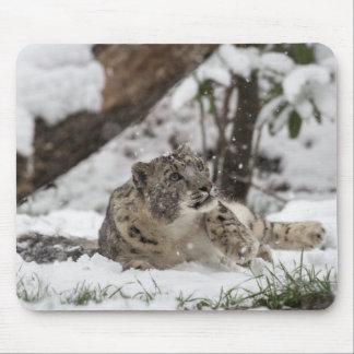 Tapis De Souris Léopard de neige curieux dans la neige