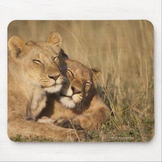 Tapis De Souris Lions | réservation de jeu d'Afrique, Kenya, Mara