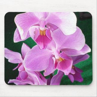 Tapis De Souris L'orchidée fleurit plan rapproché dans le rose