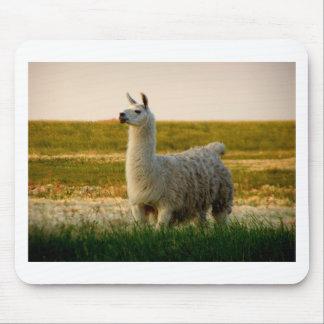 Tapis De Souris Maman de lama de prairie