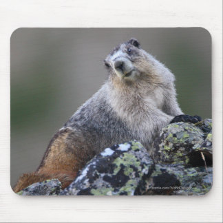 Tapis De Souris Marmot