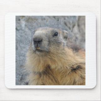 Tapis De Souris Marmotte alpine de plan rapproché