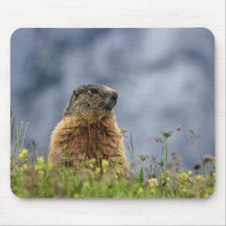 Tapis De Souris marmotte sur le pré alpin