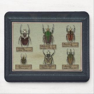Tapis De Souris Mousepad avec des scarabées de Goliath