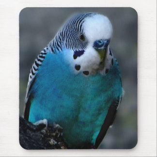 Tapis De Souris mousepad bleu de perruche