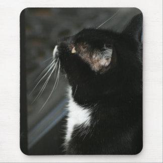 Tapis De Souris Mousepad curieux de chat