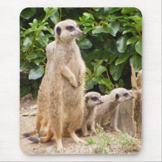 Tapis De Souris mousepad de meerkat