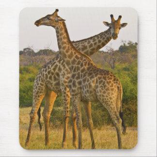 Tapis De Souris Mousepad du Kenya Afrique de girafes de masai