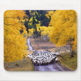 Tapis De Souris Moutons sur la route de campagne