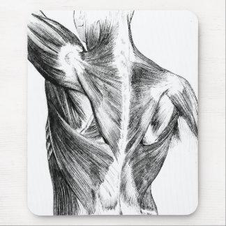 Tapis De Souris Muscles du dos vintages de l'anatomie | (circa