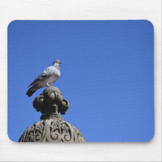 Tapis De Souris Oiseau de New York City de ciel bleu de pigeon de