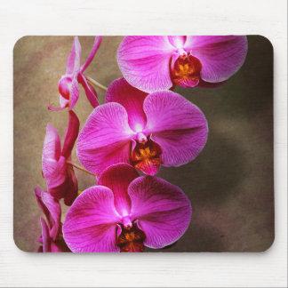 Tapis De Souris Orchidée - Phalaenopsis - l'orchidée de mite