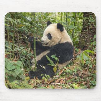Tapis De Souris Panda mangeant le bambou
