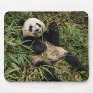 Tapis De Souris Panda mignon mangeant le bambou