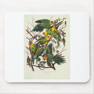 Tapis De Souris Perroquet de la Caroline - John James Audubon