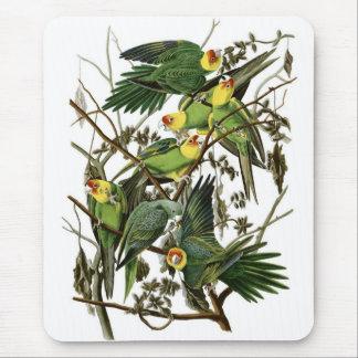 Tapis De Souris Perruches de Caroline d'Audubon