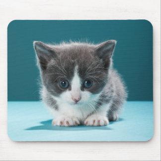 Tapis De Souris Petit chaton