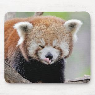 Cadeaux Panda Roux Zazzle Fr