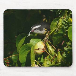 Tapis De Souris Photographie tropicale de nature de consommation