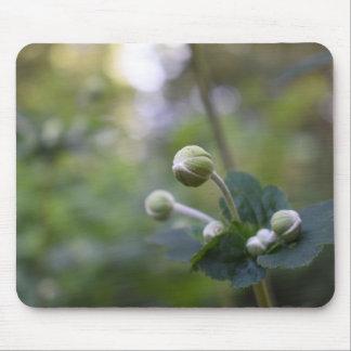 Tapis De Souris Photographie verte de nature de jardin de bourgeon