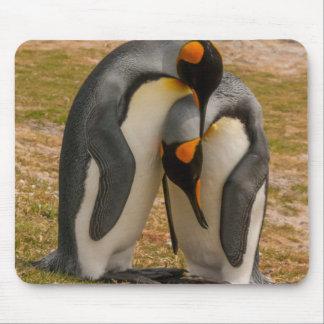 Tapis De Souris Pingouins de roi caressant, les Malouines