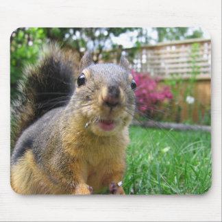 Tapis De Souris Plan rapproché d'écureuil