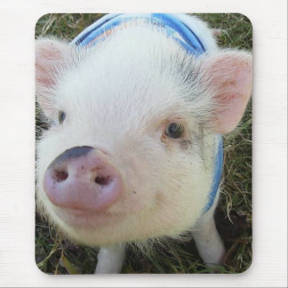 Tapis De Souris Porc mignon de ventre de pot