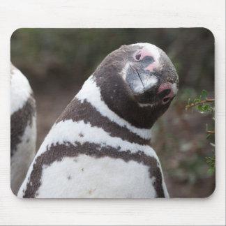 Tapis De Souris Portrait de pingouin de Magellanic