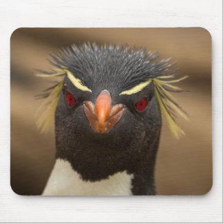 Tapis De Souris Portrait de pingouin de Rockhopper