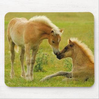 Tapis De Souris Poulains de cheval