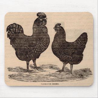 Tapis De Souris Poule et coq du 19ème siècle de Plymouth Rock
