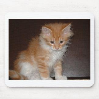 Tapis De Souris ragondin kitten.png du Maine