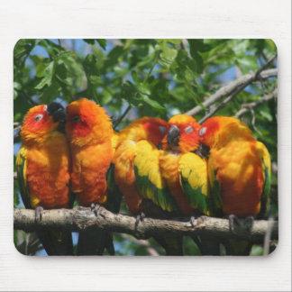 Tapis De Souris Rangée de petits perroquets mignons se blottissant