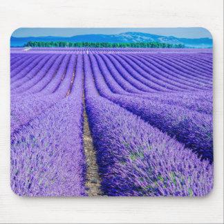 Tapis De Souris Rangées de lavande, Provence, France