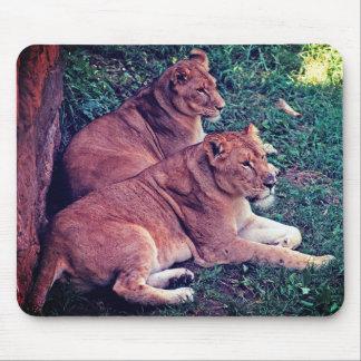 Tapis De Souris Repos de deux lions -