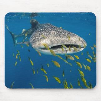 Tapis De Souris Requin de baleine avec des poissons, Indonésie