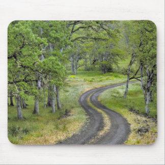 Tapis De Souris Route de campagne par des arbres, Orégon