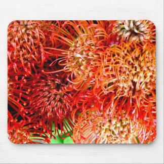 Tapis De Souris ~ saisissant de Banksia de ~