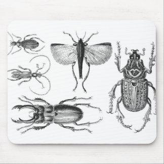 Tapis De Souris Scarabées et insectes
