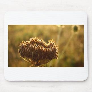 Tapis De Souris Seedhead de dentelle de la Reine Ann