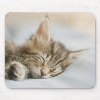Tapis De Souris Sommeil de chaton de ragondin du Maine