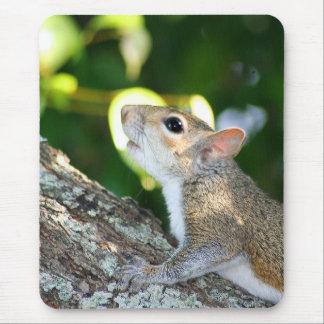 Tapis De Souris Squirrely ! mousepad