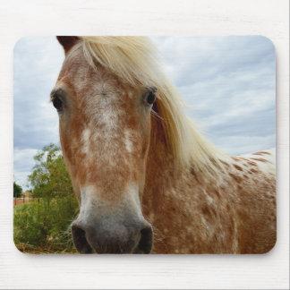 Tapis De Souris Sucrez le cheval d'Appaloosa, Mousepad.