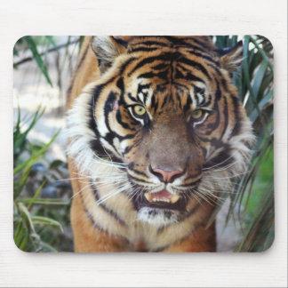 Tapis De Souris Tigre de Sumatran