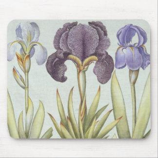 Tapis De Souris Trois variétés d'iris imberbes de Rhizomatous