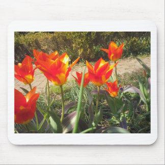 Tapis De Souris Tulipes rouges et jaunes