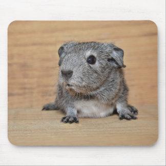 Tapis De Souris Un cobaye gris mignon sur le bois de Brown