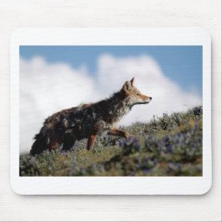 Tapis De Souris Un coyote marche en parc national de Yellowstone,
