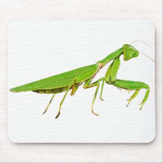 Tapis de souris vert géant de mante de prière