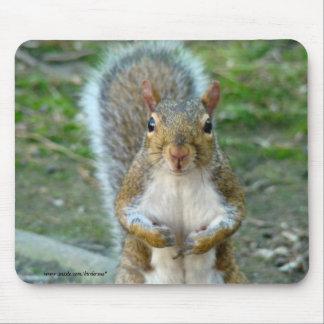 Tapis De Souris Visage doux d'écureuil